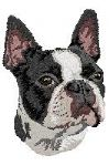 Boston Terrier 3